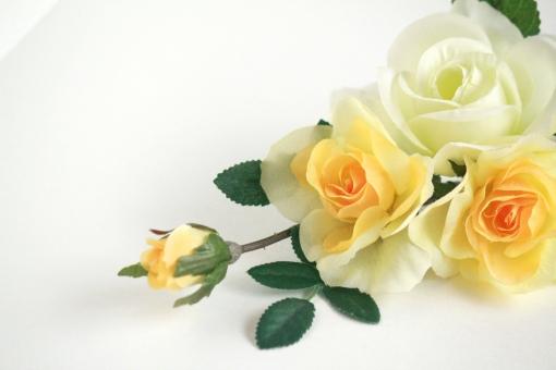 バラに関する写真写真素材なら写真ac無料フリーダウンロードok
