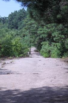植物 樹 木 樹木 緑 自然 屋外 風景 景色 沢山 群生 葉っぱ 葉 空 晴天 青空 茂る 生い茂る 生える 道 砂利道 森 林 細い道 山道