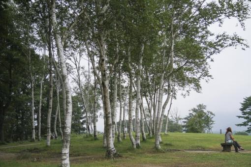 高原 蒜山 岡山県 草原 白樺 風景 壁紙 背景