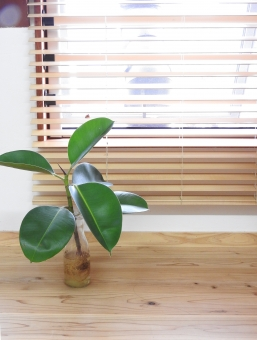 窓際の観葉植物の写真