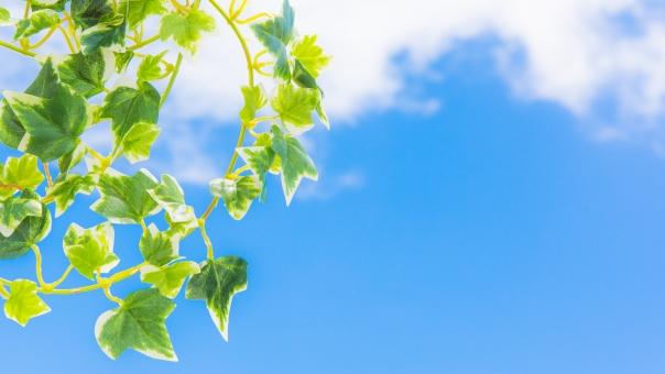 グリーン 若葉 青空 空 雲 太陽 爽やか さわやか コピースペース 春 リラクゼーション リラックス 緑 青 ブルー 水色 夏 秋空 葉 風景 初夏 光 明るい イメージ 健康 清々しい みどり 背景 壁紙 背景素材 自然 テキストスペース 植物 樹木 木 素材 バック バックグラウンド 背景写真 葉っぱ 景色 新緑 クリーン