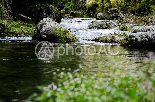 渓流5の写真