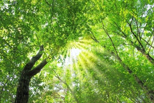 光 キラキラ 木漏れ日 森 森林 木 山 登山 トレッキング 風景 自然 植物 葉 木の葉 樹木 グリーン 緑 神秘的 ヒーリング 癒し 森林浴 背景 バックグラウンド 壁紙 ポストカード リラックス リラクゼーション めいそう 瞑想 エコ エコロジー 春 夏 涼む 涼 避暑 リゾート 新緑 若葉 繁る わさわさ 覆う 包まれる