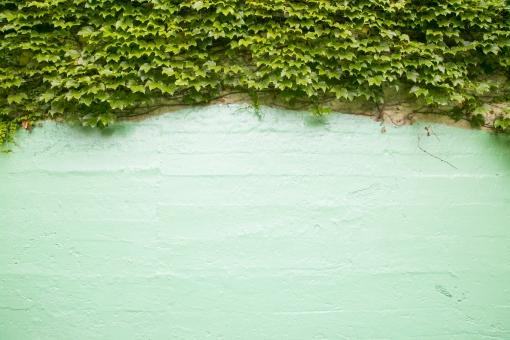 壁 カベ かべ 緑 グリーン つた 蔦 ツタ 葉 植物 素材 テクスチャ 背景 背景素材 バックグラウンド バック