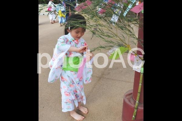 七夕の短冊をつける女の子の写真