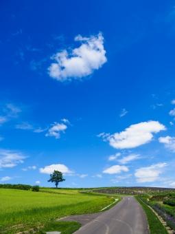 富良野の風景の写真