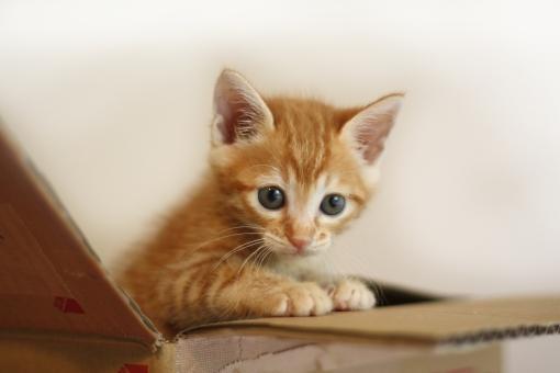 段ボール箱の子猫の写真