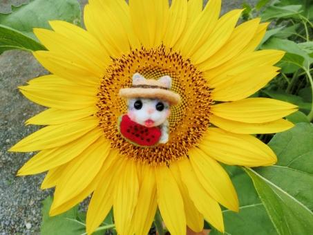 向日葵 ひまわり ヒマワリ 花 黄色 イエロー 花びら 夏 スイカ 猫 ネコ 小物 マスコット 季節 植物 暑中お見舞い 残暑見舞い