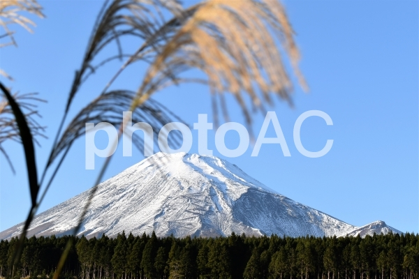 富士山とススキの写真