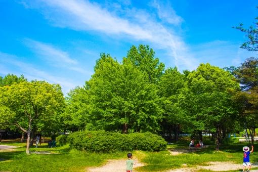 公園 子供 アスレチック パーク 青空 木 森林 林 森 山 緑 自然 夏休み 暖かい 植木 キャンプ 新緑 夏 麦わら帽子 走る はしゃぐ 元気 遊ぶ アドベンチャー 広い 広大 雲 空 熱い 日差し 太陽 atohs 森林浴 晴れ 初夏 子供達 走り回る