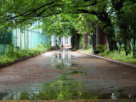 水溜り 雨 小道 公園 映る 緑 水鏡 新緑 梅雨 フェンス 散歩 自然 風景 雨上り みずたまり 反射 歩道 アーチ 木 枝 並木 光 遠近
