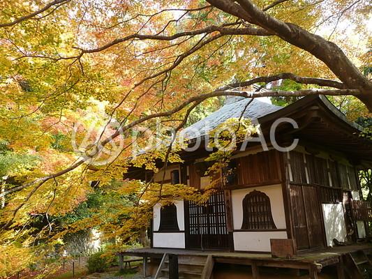 金蔵寺の紅葉の写真