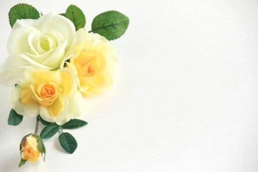 薔薇のメッセージカードの写真