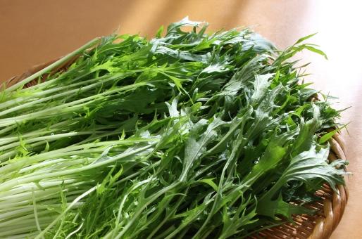 みずな ミズナ MIZUNA mizuna Mizuna MIZUNA mizuna 野菜 やさい ヤサイ 植物 葉物 サラダ 鍋 なべ ナベ さらだ 健康 自然 栄養 栄養価 栄養素 ダイエット からだ カラダ