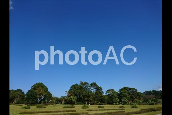 公園と青空の写真