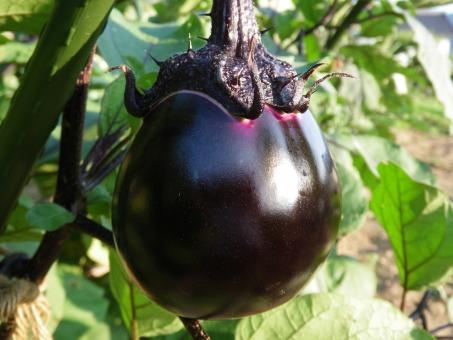 「野菜 フリー画像 ナス」の画像検索結果