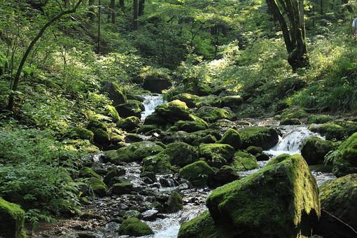 自然 植物 風景 景色 木 樹木 森 林 森林 山 山奥 鬱蒼 育つ 成長 伸びる 土 地面 水 滝 川 水飛沫 流れる 枝石 岩 苔 葉 葉っぱ 緑 無人 屋外 野生 枝 枯木