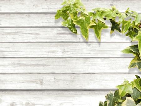 背景 素材 白 ホワイト 板 木 ペイント 塗装 文字スペース テキストスペース コピースペース デザイン素材 バック バックグラウンド カフェ レストラン ショップ 住宅 インテリア 木目 天然 ナチュラル 自然 植物 緑 diy 壁 アイビー テクスチャ ツタ 蔦 つた 葉 葉っぱ 爽やか さわやか