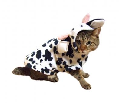 ネコ 猫 ねこ 牛 うし 仮装 コスプレ 服を着た 着ぐるみ 干支 年賀状 ちゃこ 座った 家猫 飼い猫 室内猫 ペット 背景白 白バック 被り物