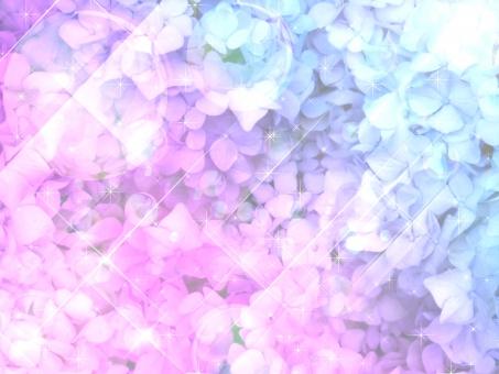 6月 植物 ピンク 赤紫 葉 緑 薄紫 綺麗 六月 6月 輝き バック 背景 水滴 初夏 素材 グラデーション 雨上がり 太陽光 光 雨 あめ 反射 しずく 雫 夏 梅雨 紫陽花 あじさい アジサイ きらめき キラキラ きらきら 自然 青 ブルー 紫 バックグラウンド テクスチャ テクスチャー 背景素材 模様 ライト 丸 円 ポストカード 白 花