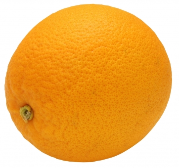 ネーブルオレンジ(PSDは背景透過・切り抜きパス入り)の写真