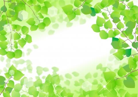 新緑 木 樹木 葉 葉っぱ テクスチャー バックグラウンド 背景 風景 イラスト 緑 みどり グリーン 黄緑 森林 自然 植物 素材 木漏れ日 こもれび 太陽 フレーム 5月 5月 若葉 春 初夏 夏 生命 エコ