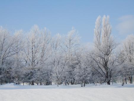 木 樹木 北海道 札幌 冬 雪 自然 冬景色 雪景色 景色 樹氷 背景 氷