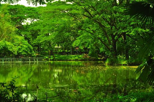 外国 海外 アジア 東南アジア フィリピン 熱帯 気候 熱帯雨林気候 屋外 野外 自然 風景 景色 植物 熱帯植物 熱帯雨林 ヤシ 樹木 木 密林 熱帯林 ジャングル 葉 草 空 水辺 湿地 映り込み 水鏡 トロピカル 神秘的 緑 グリーン エメラルド