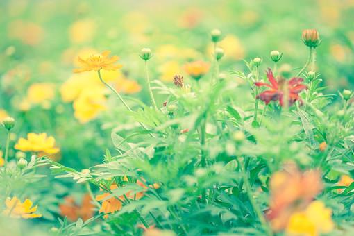 自然 植物 花 花びら めしべ おしべ 花粉 つぼみ 葉 葉っぱ 緑 黄色 赤 オレンジ色 橙色 群生 集まる 密集 沢山 多い 成長 育つ 伸びる 咲く 開花 開く ぼやける ピンボケ 加工 アップ 無人 室外 屋外 風景 景色