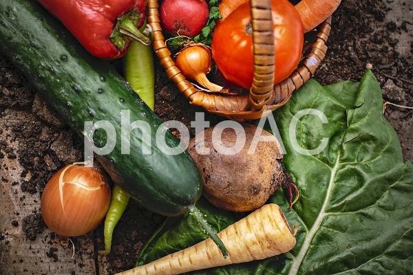野菜たち25の写真
