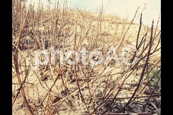 枯れ木の荒野の写真