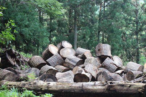 自然 風景 屋外 外 野外 晴れ 晴天 景色 植物 森林 環境 山 山林 木 樹木 林 緑 枝 幹 草 自然風景  森  林地 山中 背景 背景素材 林業 資材 木材 資源 備蓄 置き場 丸太 薪材 薪