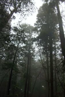 霧 靄 霞 森林 林 森 山 樹木 木立ち 木々 朝もや 朝 早朝 植物 天気 天候 weather 鬱蒼 閑静 静寂 穏やかな景色 穏やかな風景 雨露 自然 緑 風景 景色 曇天 曇り空 朝の風景 朝の景色 monotone モノトーン モノクロ monochrome
