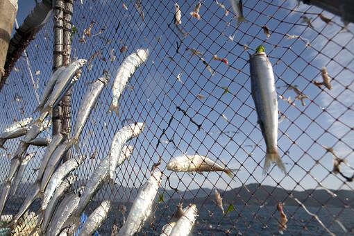 屋外 野外 漁 海上 漁獲 漁り 魚 獲る 漁業 海 水揚げ 大量 大漁 釣り 漁獲 早朝 船 船上 漁船  網 引き揚げ 捕獲  空