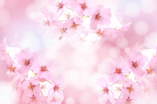 桜テクスチャの写真