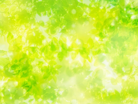 全面の新緑木漏れ日イメージの抽象背景の写真