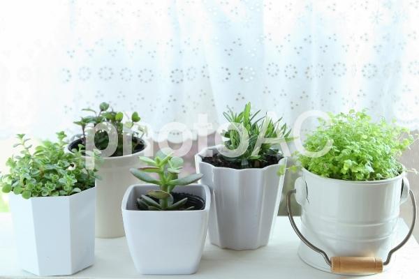 窓辺のグリーンの写真