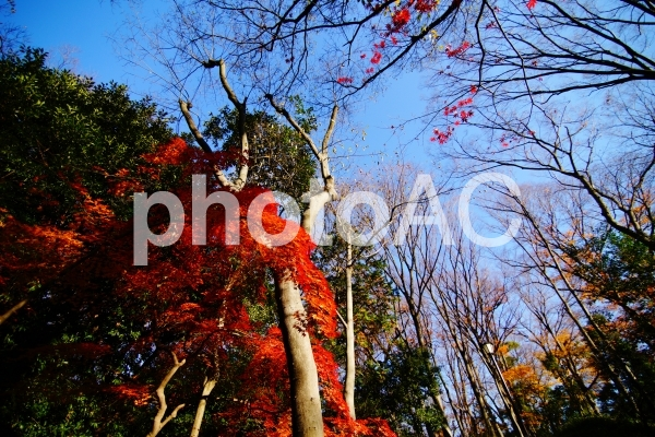 有栖川宮記念公園の紅葉の写真