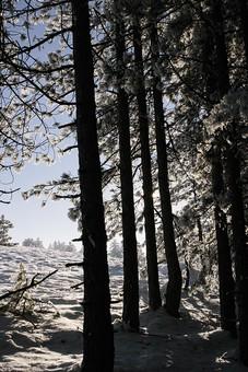 冬の風景 山 やま 冬 風景 景色 雪 雪山 雪国 ゆき 雪景色 冬化粧 銀世界 白銀 寒冷 寒い 雪原 降雪 白 純白 パウダースノー スノー 天気 自然 大自然 大地 木 樹木 植物 空 影 シャドウ シャドー 日差し 陽射し 森 森林
