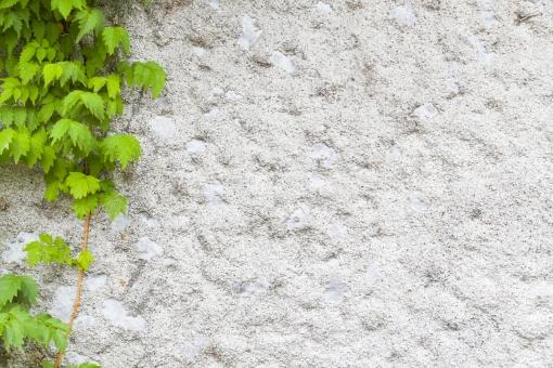 壁 白い壁 白 緑 グリーン 植物 素材 カベ かべ テクスチャ インテリア エクステリア 建築 建築物 背景 背景素材 バック バックグラウンド