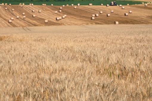 穀倉地帯の写真素材|写真素材な...