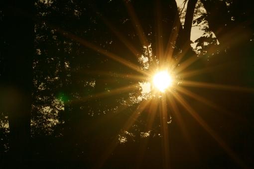 森の中の太陽の写真