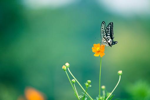 自然 風景 景色 環境 スナップ 旅行 散歩 公園 森林 緑 日光 季節 葉っぱ 植物 美しい きれい シルエット 癒し 青い 草花 野草 栽培 のどか  優しい 保養 花 黄色い花 ちょうちょ 蝶 虫 飛ぶ 動物