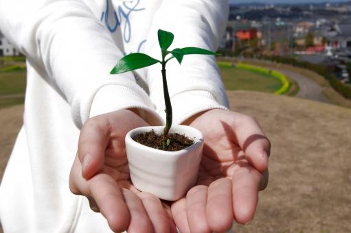 新芽 新しい命 生命 生命保険 女の子 春 育てる 植物 培養 成長 環境保護