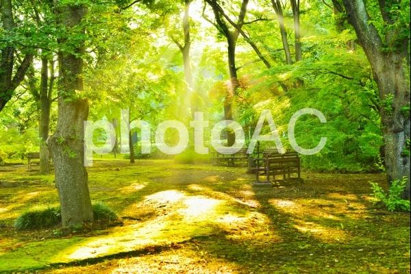 風景 木漏れ日の差し込む早朝の公園の写真