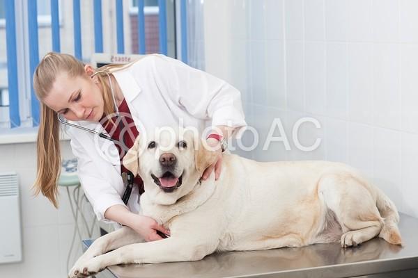 診察を受ける犬85の写真
