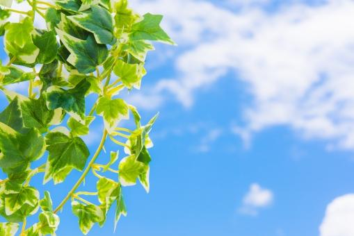 グリーン 青葉 若葉 青空 空 雲 太陽 爽やか さわやか コピースペース 春 リラクゼーション リラックス 緑 青 ブルー 水色 夏 秋空 葉 風景 初夏 光 明るい イメージ 健康 清々しい みどり 背景 壁紙 背景素材 自然 テキストスペース 植物 樹木 木 素材 バック バックグラウンド 背景画像 背景写真 葉っぱ 景色 新緑 クリーン