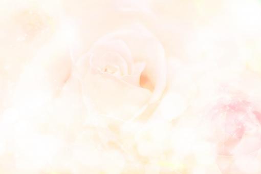 柔らかな光の中の薔薇_キラキラ_クリームの写真