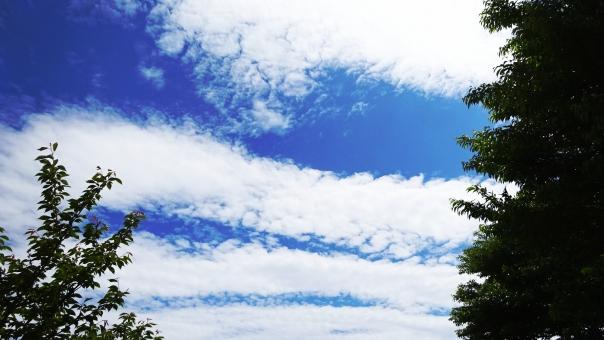 雲 くも 曇り 空 青空 晴天 木 木々 もくもく 線 宇宙 地震雲 リラックス 空気 軽い 地球 未来 壁紙 背景 風 太陽 光 日 日光 明るい 未来 家族 公園 筋 波