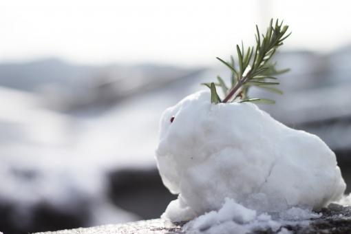 雪 冬 雪ウサギ 雪兎 ユキウサギ 白 子供 雪遊び